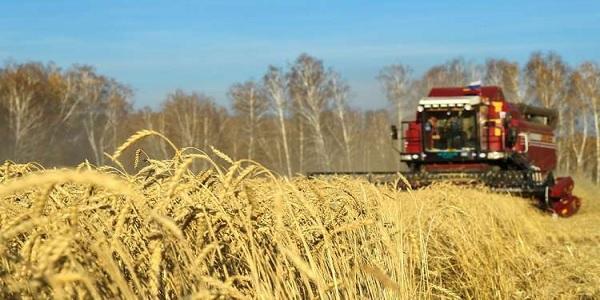 موسكو تصدر أول دفعة من القمح إلى السعودية