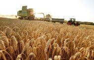 كيف يمكن للبنان مواجهة المجاعة القادمة وتحصين أمنه الغذائي